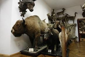 zoo_muzej